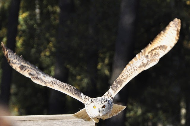 The Spirit of the#Owl