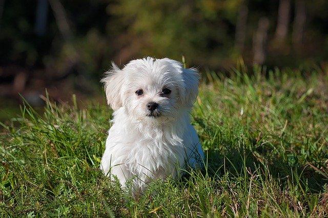 Don't Be a Puppy Snatcher!(Dream)
